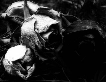 black_roses